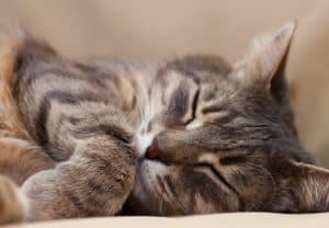 4 Warning Signs and Symptoms of Diabetes in Cats