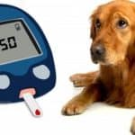 4 Warning Signs and Symptoms of Diabetes in Dogs