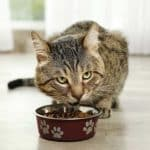 Best Diabetic Cat Food