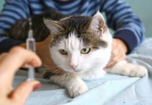 Cost of Treating Diabetes in Cats