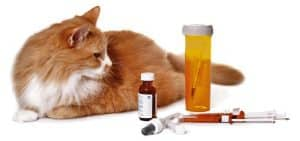Diabetes In Cats (Feline Diabetes): Signs, Symptoms and Causes