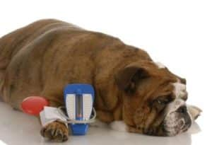 Diabetic Coma In Dogs