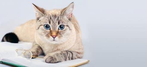 Diabetic Ketoacidosis in Cats