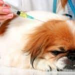 Insulin Overdose Symptoms In Dogs
