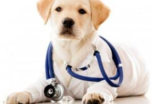 Insulin Resistance in Dogs