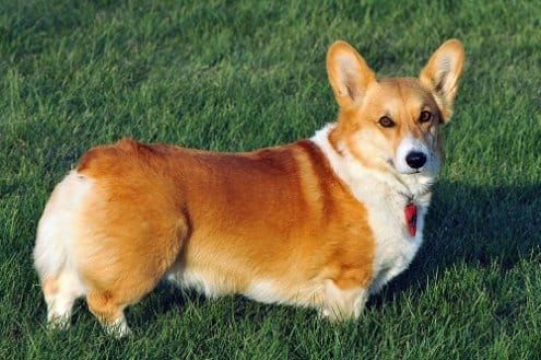 Lantus Insulin For Dogs