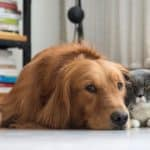 Preventing Diabetes in Dogs and Cats