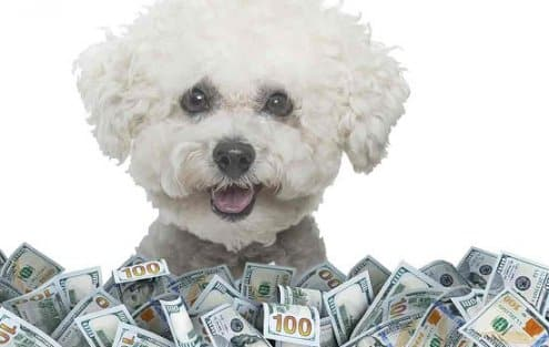 The Cost of Having a Dog with Diabetes