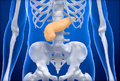 What Organ in The Human Body Produces Insulin