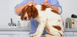 Insulin For Dogs - Types, Dosage and Side Effects